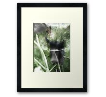 cats in the grass Framed Print