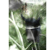cats in the grass Photographic Print