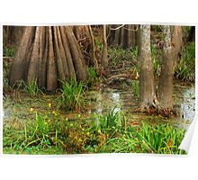 Swamp Floor, Lake Martin, Louisiana Poster
