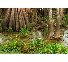 Swamp Floor, Lake Martin, Louisiana Photographic Print