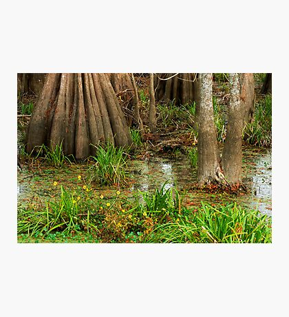 Swamp Floor, Lake Martin, Louisiana Photographic Print