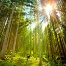 ~Forest Revelation~ by Delfino