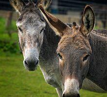 Donkey Double by FranJ