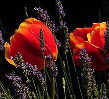 LOVELY TULIP AND LAVENDER GARDEN... by RoseMarie747