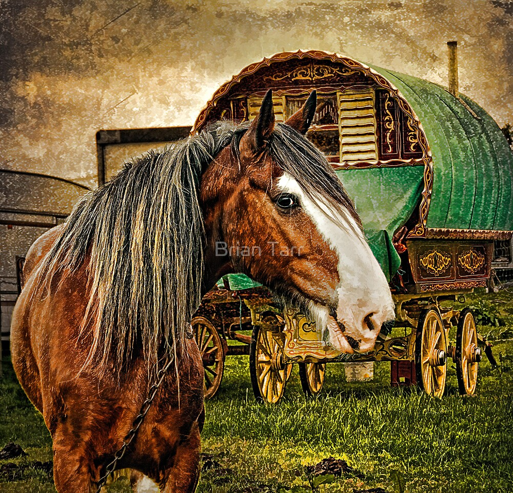 The Gypsy Vanner by Tarrby