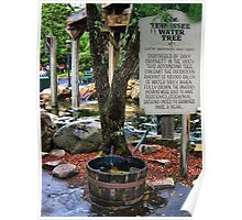 ✿⊱╮TENNESSEE WATER TREE PIGEON FORGE✿⊱╮ Poster