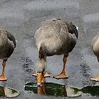 Brave Goose by JenaHall