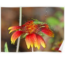 Pretty bug on pretty flower ! Poster