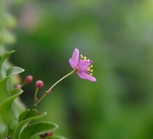 Tiny Pink Flower by Penny Kittel