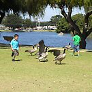 Boy Chases Geese by Sandra Gray