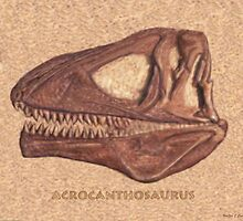 Acrocanthosaurus Skull Fossil by Walter Colvin