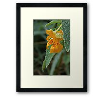 Spotted Touch Me Not Framed Print