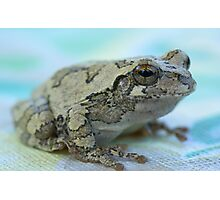 Gray tree frog Photographic Print