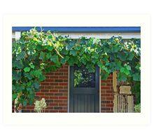 Cabernet grapevine Art Print