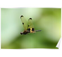 Dragonfly (Yellow-Striped Flutterer) Poster