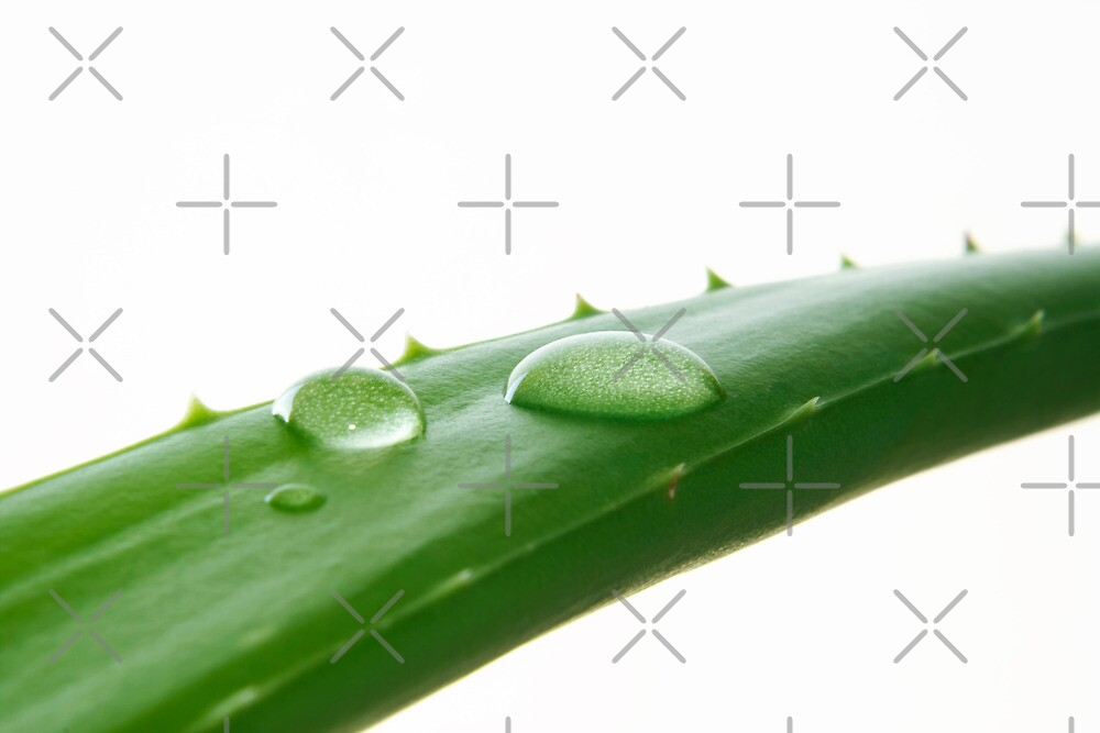 Aloe Vera Leaf Macro by BlinkImages