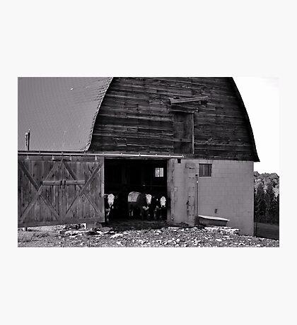 Cow Barn Photographic Print