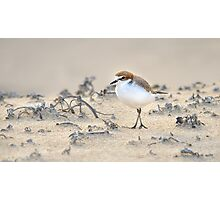 Red-capped plover Photographic Print