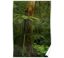 Rain Forest. Poster