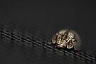 Lady Bug III by Adam Le Good