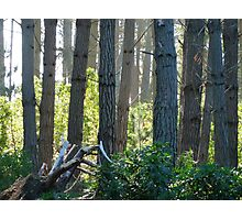 Never Interrupt a Horticultural Branch Meeting Photographic Print