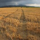 Dry Field Road in The Countryside by kirilart