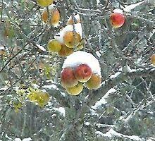 Snowfall on apples. by Anne Sanders