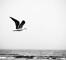 Soaring Nova Scotia Gull by phaedra1973