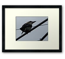 bird on a wire Framed Print