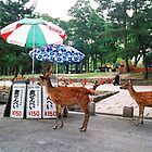 Nara, Japan by Sam Gregg