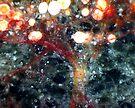 Chinese Lanterns In The Snow by Stephanie Bateman-Graham