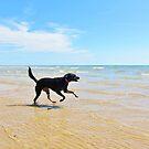 Summer Splash by Ticker