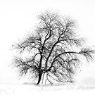 Winter White by John Dunbar