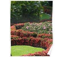 Colorful Backyard - Jardín Colorado Poster