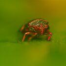 Pesty by starwarsguy