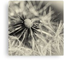 Another Blowball... (square) Canvas Print