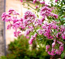 Fleur by Wintermute69