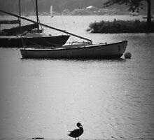 Duck on the Dock by Amanda Vontobel Photography