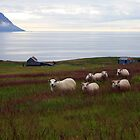Sheeps by johannesfrank
