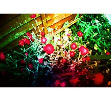 Hallucination Flowers Photographic Print