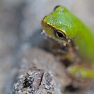 Mr. Green by starwarsguy