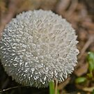 Puffball by starwarsguy