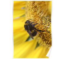 Buzzy bumble bee Poster