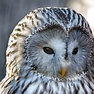 Ural Owl by Ellesscee