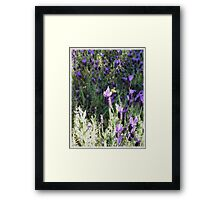 Beeutiful Lavender Framed Print