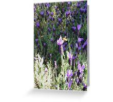 Beeutiful Lavender Greeting Card