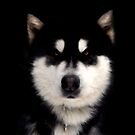 good doggie by Matt Mawson