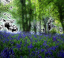 Blue Bells by Anthony Palmer-Greene
