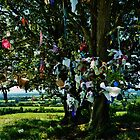 Fairy Tree Tara hill  by Sean McAughey
