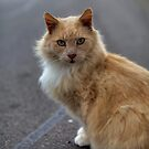 Winston the Wonder Cat by sedge808